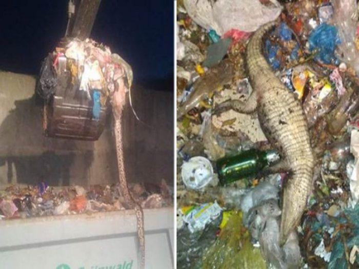 По данным разных СМИ, животных выбросил пляжный фотограф, которому нечем было кормить их в межсезонье
