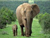 Мать погибшего слонёнка несколько дней приходит на место трагедии