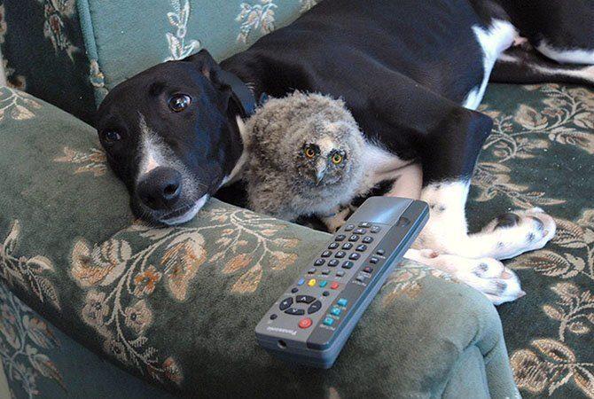 Сова и собака на диване