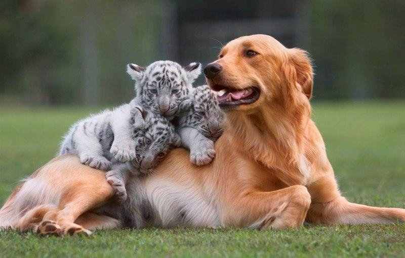 Трогательная дружба между животными (часть 1)