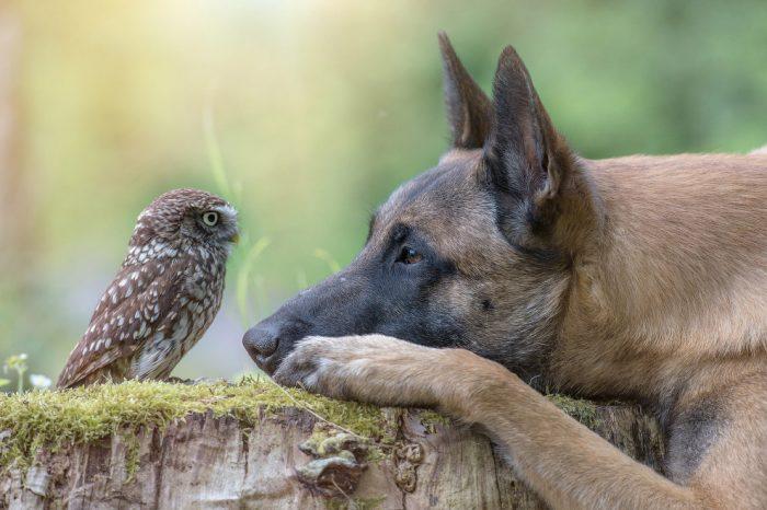 Хищная птица и собака Инга