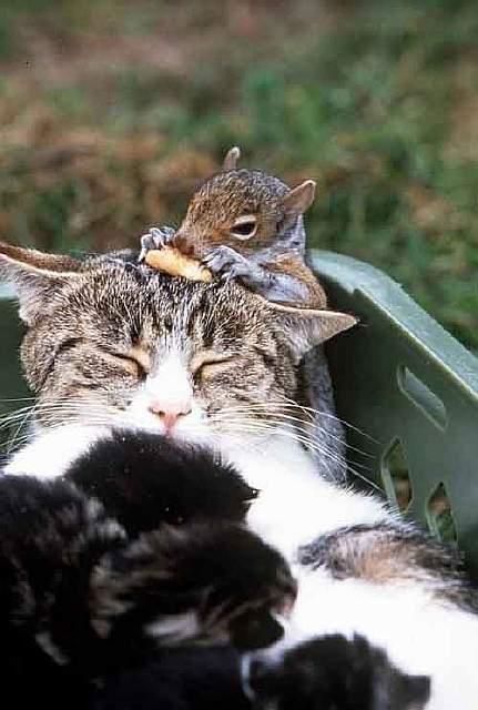 Дружба белки и кошки