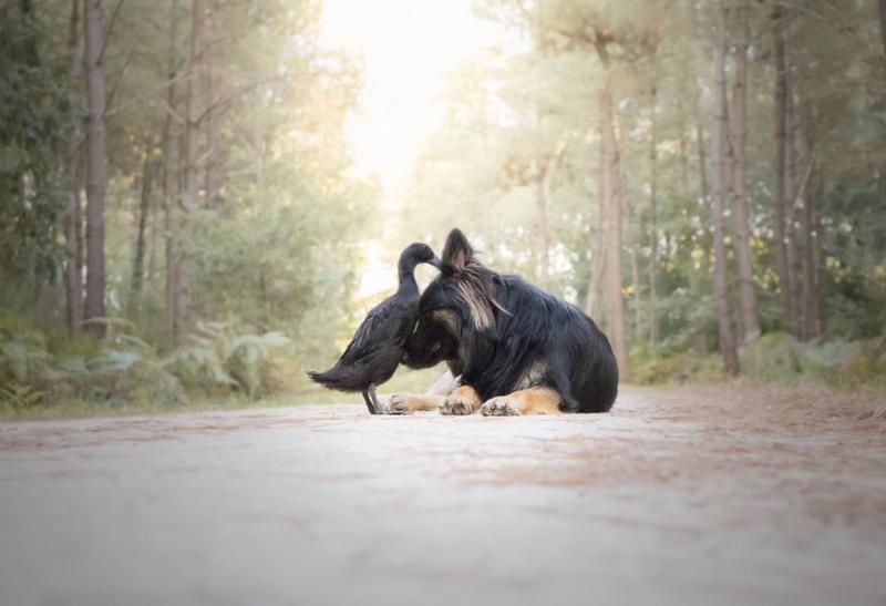 Трогательная дружба между животными — часть 2