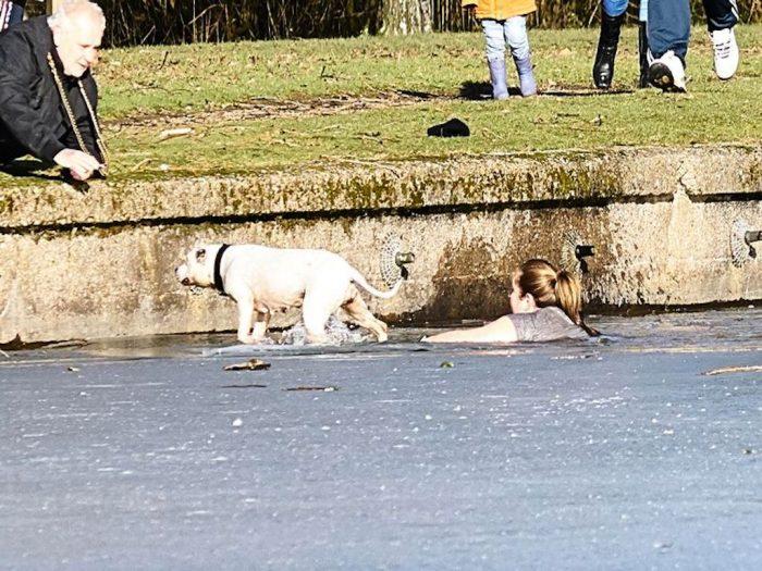 Спасение бульдога на озере Халл