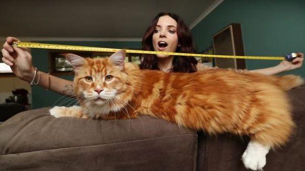 Самый длинный кот и его хозяйка