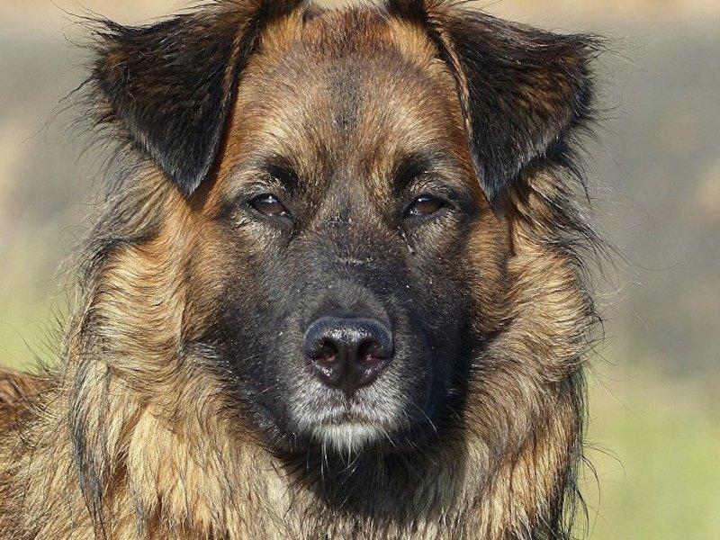 Бродячий пёс загрыз целый курятник у фермера из Краснодара