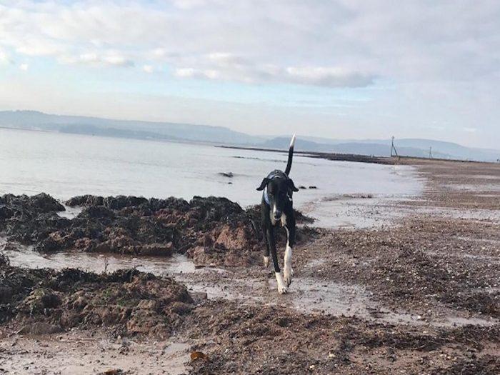 Гектор на пляже
