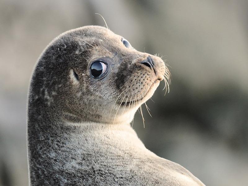 Тюлень из Новой Зеландии доказал учёным, что был знаком с одним из туристов