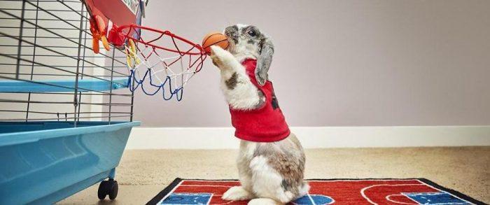 Кролик — баскетболист