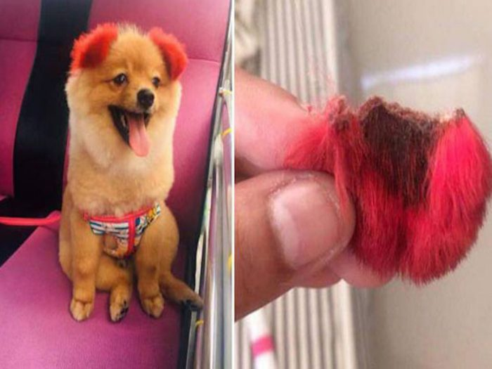 Пёс Диффи и его уши