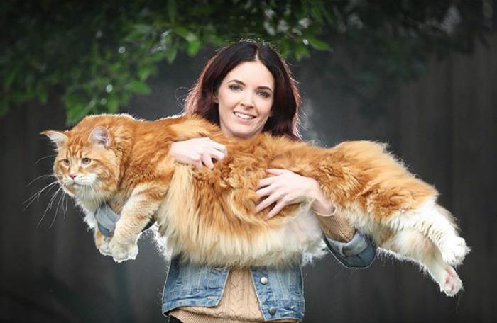 Стефи Хёрст со своим котом