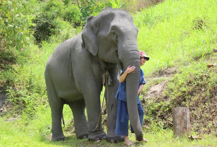 Слон с человеком