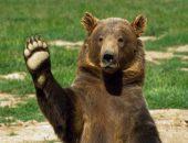 Турист по ошибке забросил в вольер с бурыми медведями свой телефон