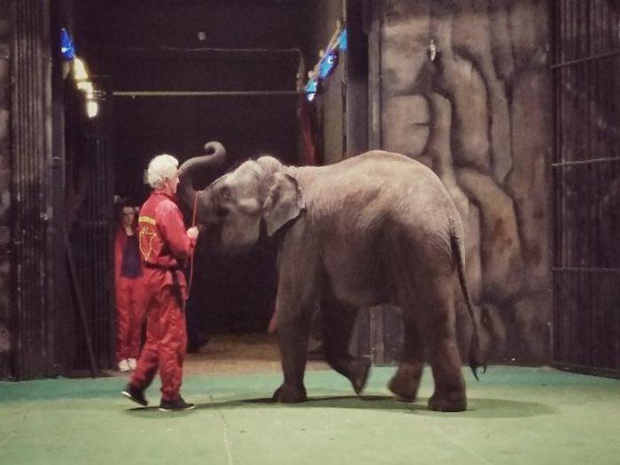 Репитиция со слоном