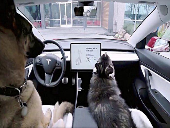 Tesla и новый режим для собак