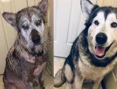 Зоозащитники из Миссисипи спасли пса, просидевшего всю жизнь на цепи