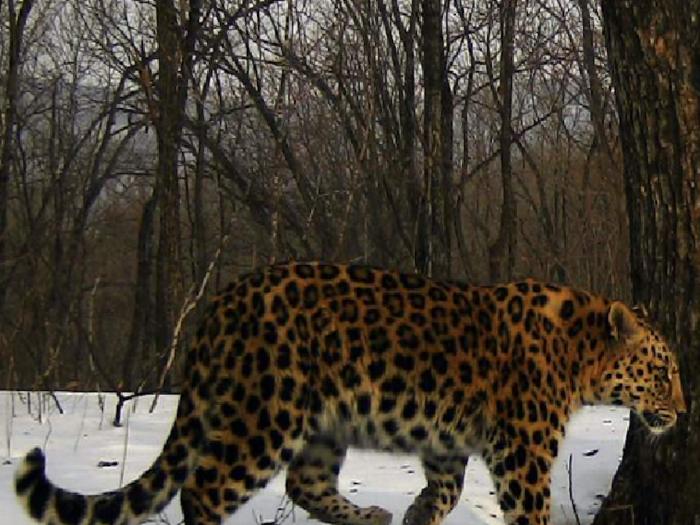 Фото леопарда в 2019 году