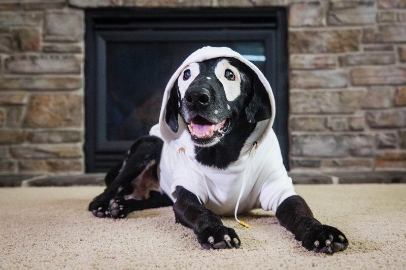 Пёс с витилиго