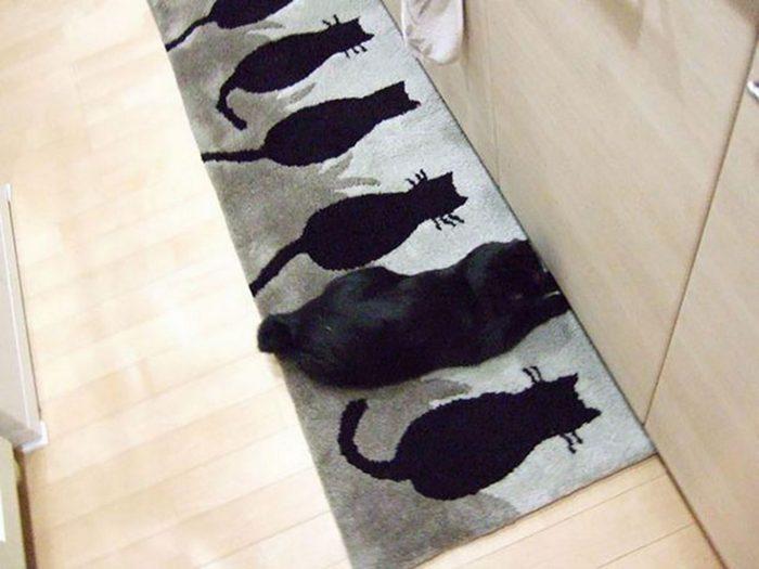 Кот на коврике с рисунками кошек