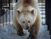 Спячке конец: косолапый из красноярского зоопарка пробудился ото сна
