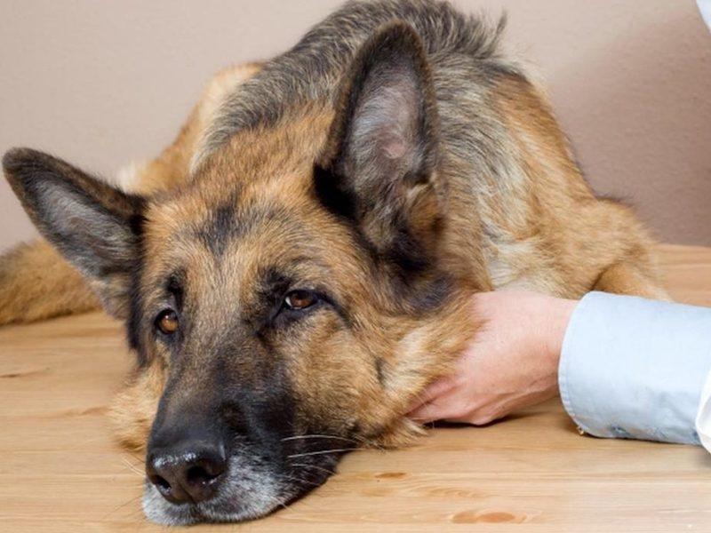 Супруги из Подмосковья возвращают к жизни брошенных и больных собак