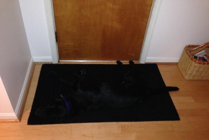 Собака на коврике у двери