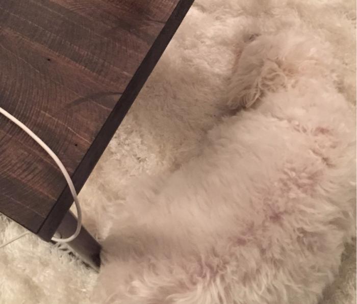 Собака слилась с ковром