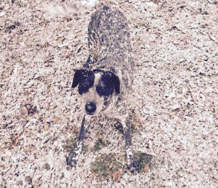 Собака в тон снега
