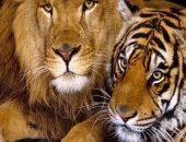 Игра с хищниками в «люди против животных» привлекла внимание зоозащитников