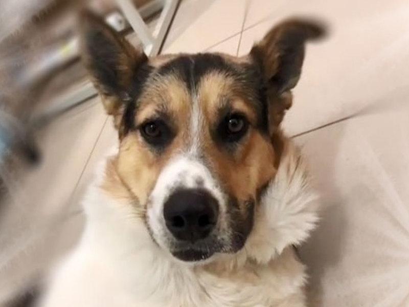Уличный пёс из России стал эмигрантом и переехал в Германию на ПМЖ