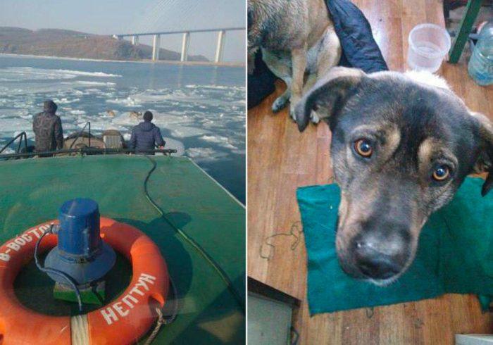 Экипаж спасает собак