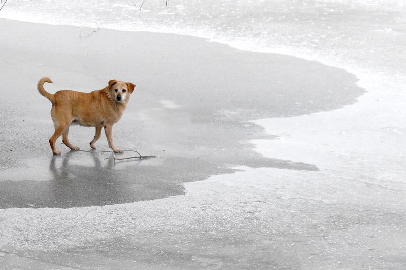 Экипаж рыболовного судна во Владивостоке «выловил» плавающих на льдине псов-эстремалов