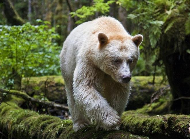 Гролар в лесу
