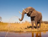 Справлявшиеся по реке в Таиланде туристы подверглись нападению слона