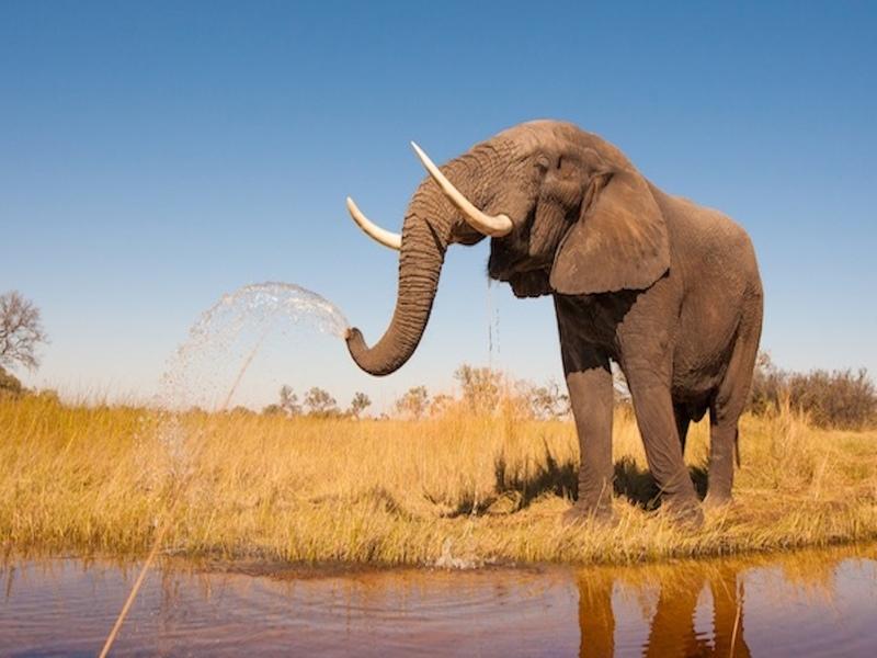 Сплавлявшиеся по реке в Таиланде туристы подверглись атаке слона