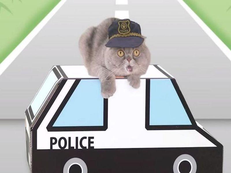 Японцы сняли ролик о ПДД для котиков