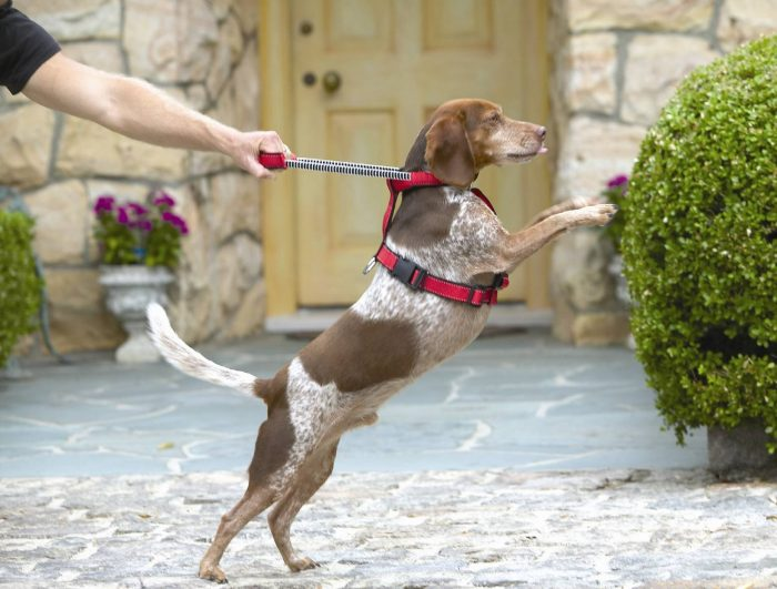 Собака стоит на задних лапах