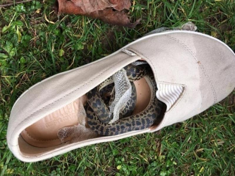 Змея пролетела полмира в ботинке одной из туристок