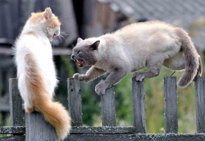 Кошки ссорятся на улице
