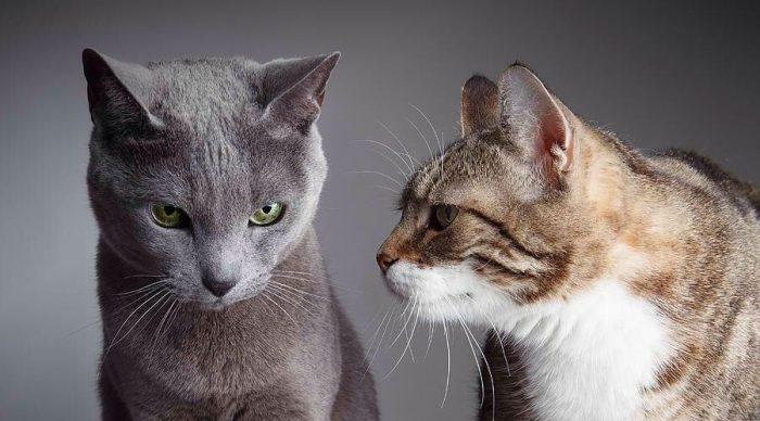 Кошка злобно смотрит на другую