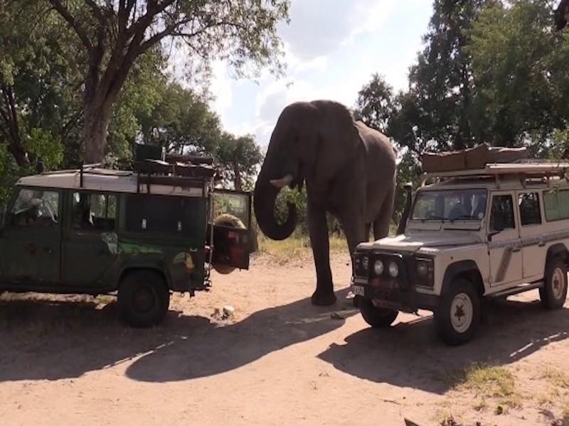 Африканский слон зашёл в гости к туристам в поисках еды