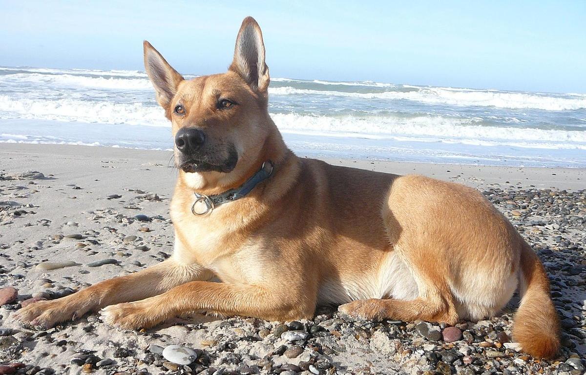 Флексопрофен для собак: полная инструкция по применению