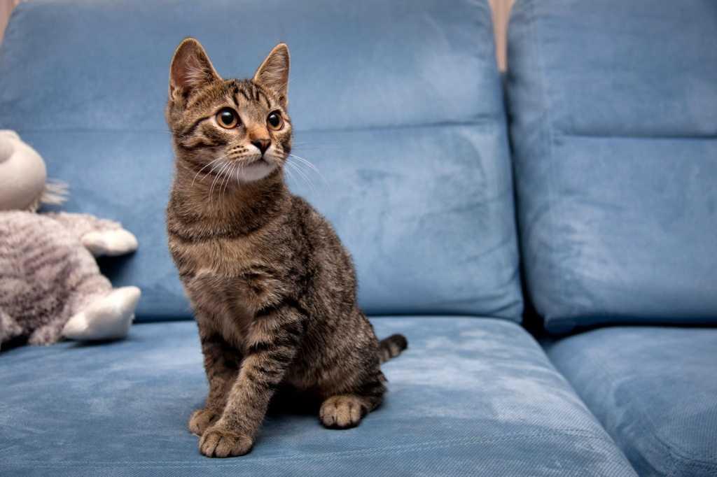 Какую обивку дивана лучше выбрать, если в доме живет кот