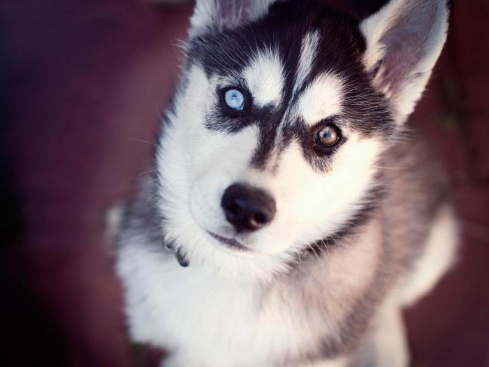 Правда ли, что собаки видят мир в черно-белом свете