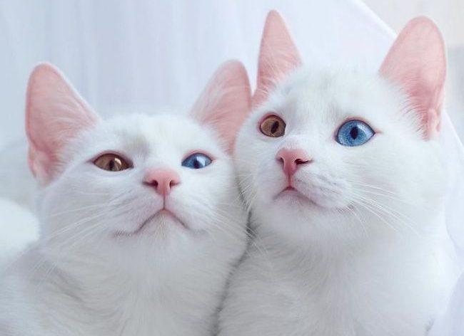 20 уникальных и редких пород кошек, о которых мало кто знает