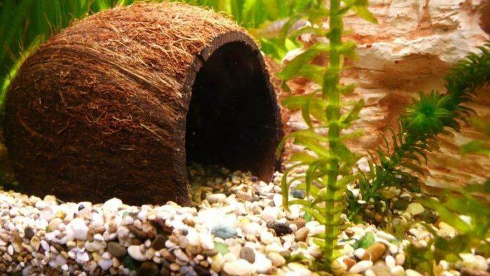 Декор для аквариума из кокосовой скорлупы