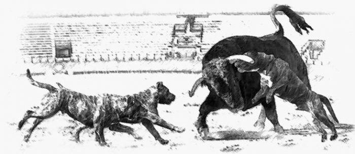 Молоссы атакуют быка