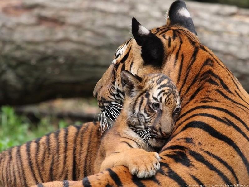 В Барнаульском зоопарке ожидается массовый бэби-бум