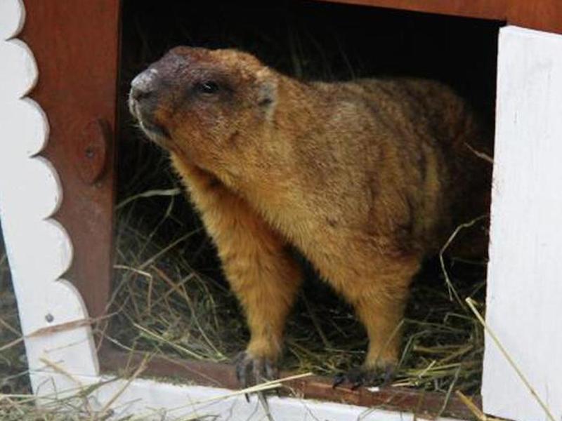 Степные грызуны пробудились после долгого сна в главном столичном зоопарке