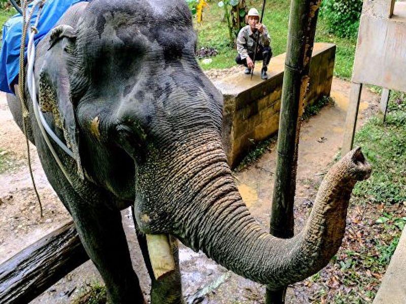 В Индии слон нечаянно сел на своего надсмотрщика